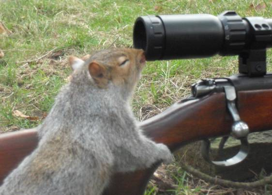 Squirrel with gun